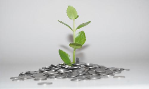 Pflanze gedeiht auf Münzen