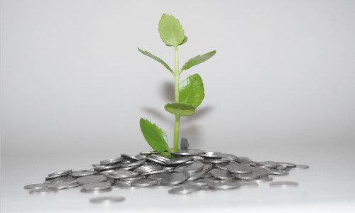 Eine grüne Pflanze wächst aus einem Stapel Kleingeld.